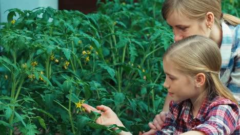 Madre-E-Hija-Mirando-Y-Hablando-De-Plantas-De-Tomate-En-Huerta