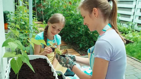 Mother-Gives-Her-Daughter-Seedling-Of-Salad-Females-Planning-Planting-Seedlings