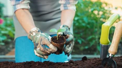 Plantar-Plántulas-Vegetales-En-El-Jardín