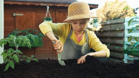 Porträt-Junger-Bauer-Pflanzt-Sämling-Von-Tomaten-In-Den-Boden