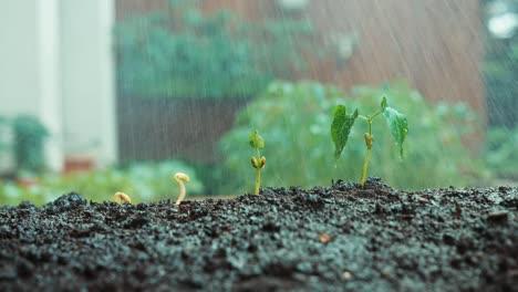 Cerca-De-La-Lluvia-Cayendo-Sobre-Semillas-En-El-Suelo-