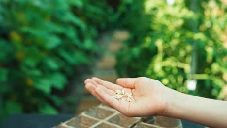 Seeds-For-Life-Close-Up-Shot
