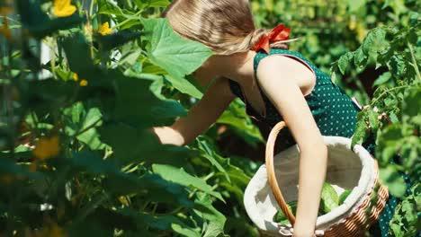 Smiling-Girl-Child-In-Dress-Picking-Up-Vegetables-To-Basket-In-Kitchen-Garden