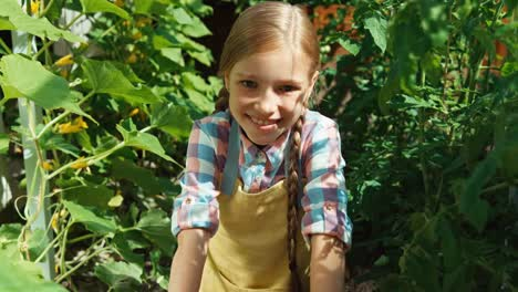 Smiling-Little-Farmer-Girl-9-Aged-Picking-Up-Vegetables-Cucumbers-In-The-Garden