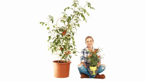 Woman-Looking-At-Big-Tomato-Plant-On-White-Background