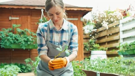 Frau-Plant-Setzlinge-In-Erde-Zu-Pflanzen-Und-Hält-Die-Pflanze-In-Den-Händen-Lächelnd-Hands