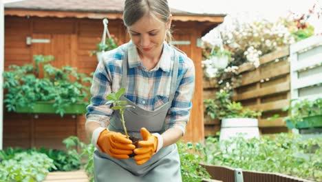 Mujer-Planeando-Plantar-Plántulas-Al-Suelo-En-Su-Huerto