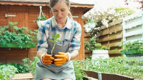 Woman-Planning-Planting-Seedlings-To-Soil