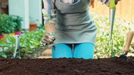 Woman-planting-vegetable-seeds