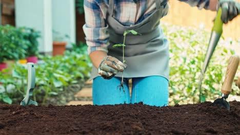 Mujer-Plantar-Plántulas-De-Vegetales-Al-Suelo-En-El-Huerto