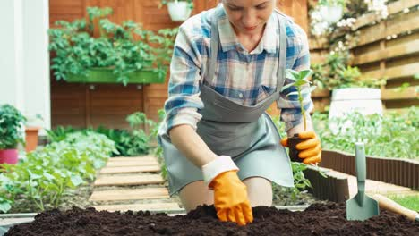 Mujer-Plantar-Plántulas-De-Verduras-Al-Suelo-En-Su-Huerta