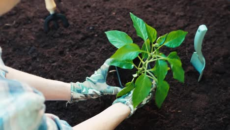 Woman's-hands-planting-seeds-in-the-soil