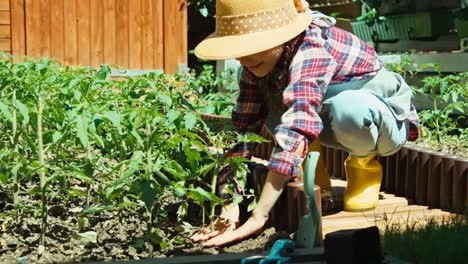 Young-Farmer-Girl-Planting-Tomato-And-Smiling-At-Camera