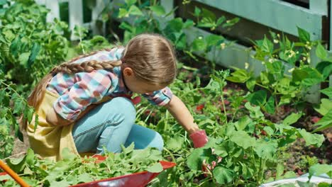 Young-Farmer-Girl-Working-In-The-Garden-Girl-Is-Tired-And-Wipes-Her-Forehead