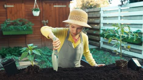 Young-Farmer-Planting-Seedling-Of-Pepper-To-Soil-At-Kitchen-Garden