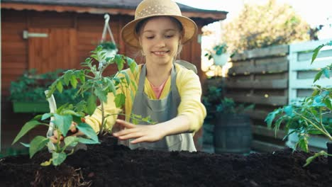 Young-Farmer-Planting-Seedling-Of-Tomato-To-Soil-At-Kitchen-Garden