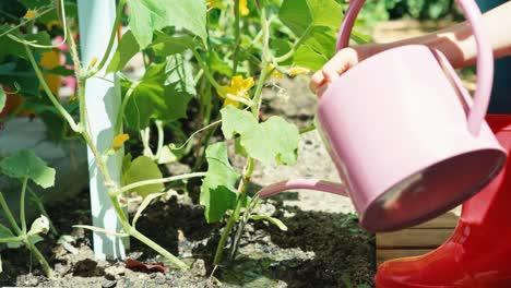 Young-Farmer-Watering-Cucumber-Plants-In-Her-Garden