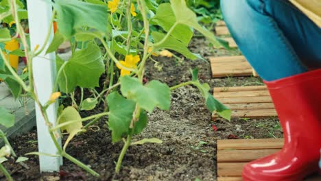 Young-Farmer-Watering-Vegetables-In-Kitchen-Garden