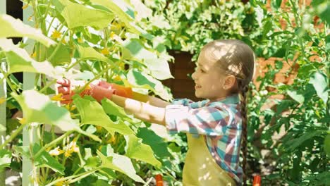 Young-Farmer-Working-In-The-Kitchen-Garden-In-The-Frame-White-Butterfly-Flying