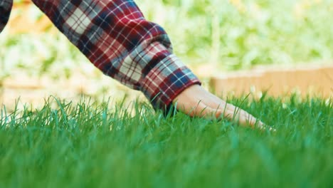 Young-Green-Grass