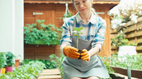 Young-Woman-Planting-Seedlings-Of-Vegetables-To-Soil-In-Her-Kitchen-Garden