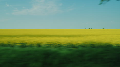 Flowering-Yellow-Rape-Field-From-Car-Window