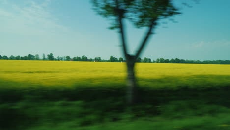 View-From-Car-Window-Fields-Of-Rapeseed