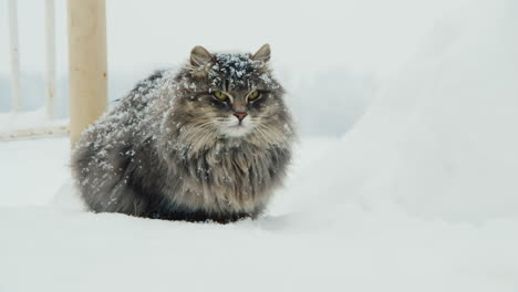 Fluffy-Cat-Sits-In-The-Snow