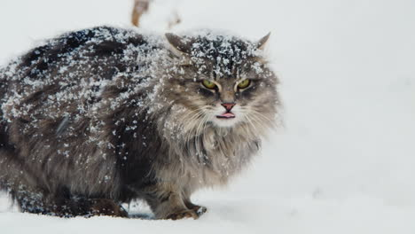 Unhappy-Defensive-Cat-Sitting-In-The-Snow