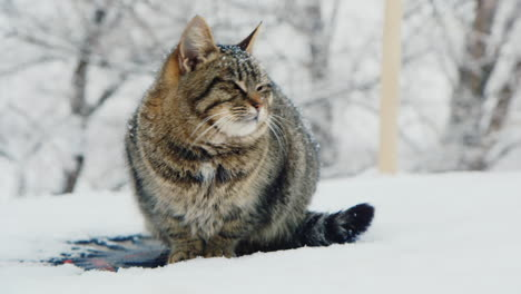 Cat-Sits-And-Rests-In-The-Snow