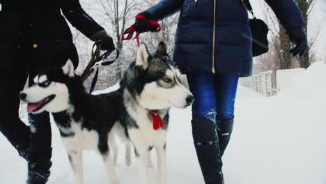 Walking-With-Husky-Dogs-On-A-Winter-Day-01