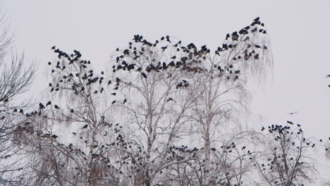 Crows-Sitting-On-A-Bare-Tree-On-A-Winter-s-Day