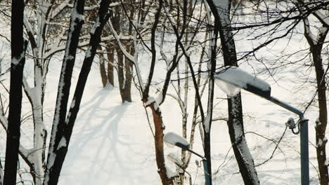 Trees-In-The-Park-Covered-With-Thick-Snow