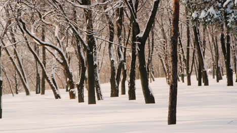 Static-Shot-Of-Trees-In-Snow-Covered-Park