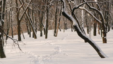 Static-Shot-Of-Snow-Covered-Trees-In-Park