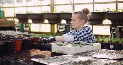 Gardener-Working-With-Flower-Sprouts-In-Greenhouse