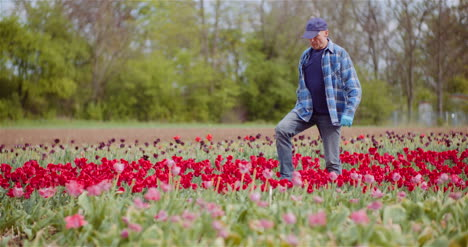 Agriculture-Farmer-Working-At-Tulips-Field-2