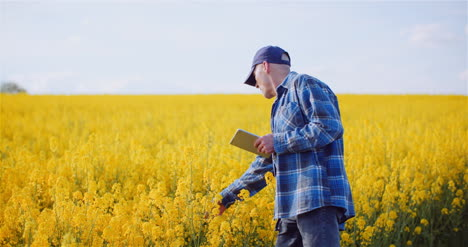 Agriulture-Farmer-Using-Digital-Tablet-Computer-Touching-Inspecting-Rapeseed-Field-At-Farm-