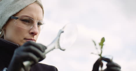Close-Up-Of-Female-Agronomist-Examining-Damaged-Plant-Through-Magnifying-Glass