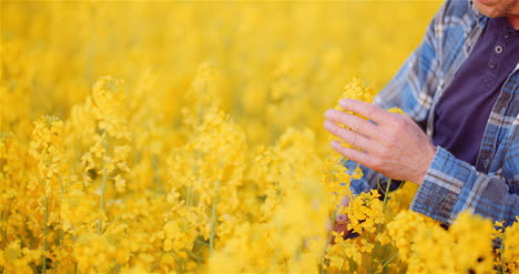 Agronomist-Checking-Rapeseed-Crops-At-Farm-Farmer-Examining-Crops-Checking-Plants-Quality-Agriculture-Concept-