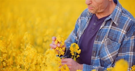 Agronomist-Checking-Rapeseed-Crops-At-Farm-Farmer-Examining-Crops-Checking-Plants-Quality-Agriculture-Concept-1