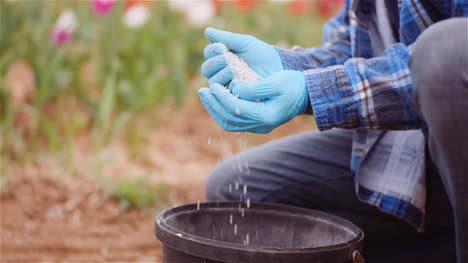 Farmer-Examining-Herbicides-Fertilizer-In-Hands-Before-Fertilizing-Agriculture-Field-8