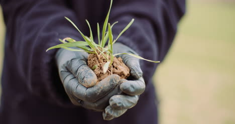 Midsection-Of-Female-Botanist-Holding-Grass-In-Soil