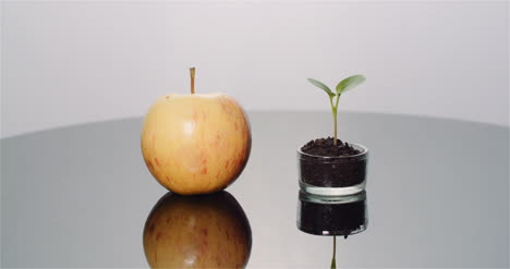 Fresh-Ripe-Apple-And-Small-Young-Apple-Tree-Fruits-Production-Concept-1