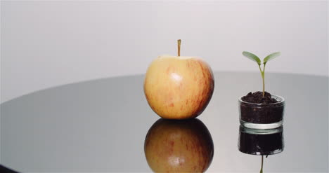 Fresh-Ripe-Apple-And-Small-Young-Apple-Tree-Fruits-Production-Concept-2