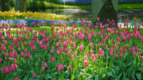Variety-Tulips-In-The-Netherlands