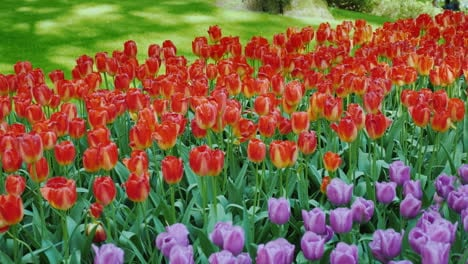 Flower-Bed-With-A-Wide-Variety-Of-Colorful-Tulips