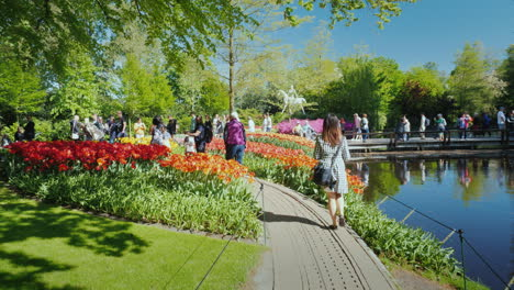 Tourists-Viewing-Tulips-In-The-Netherlands