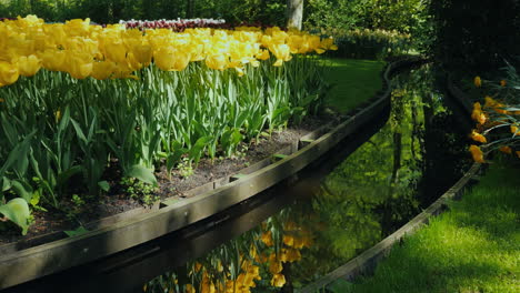 Water-and-Yellow-Tulips-Landscape-Design