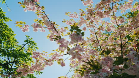 Blossom-on-Sunny-Day